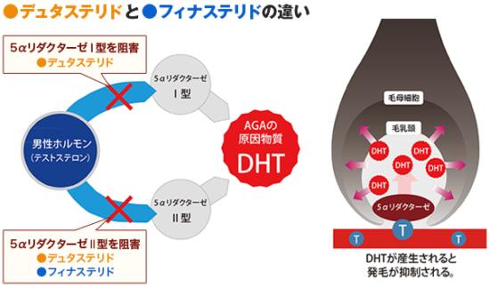 デュタステリドとは?Ⅰ型とⅡ型の5αリダクターゼとテストステロン結合の抑制