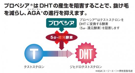 フィナステリド錠1mgが5αリダクターゼを抑制しDHTの減少