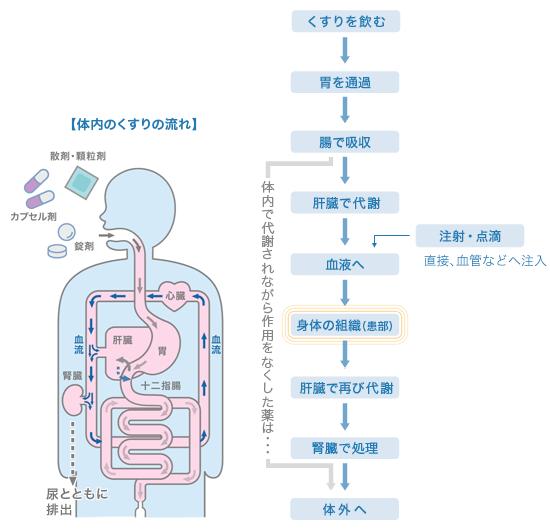肝臓循環でプロペシア(フィナステリド)が吸収されていく